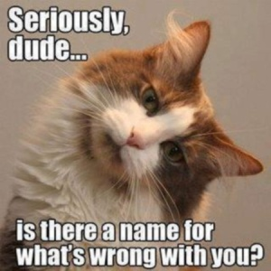 "A picture of a cat tilting its head with text saying, ""Seriously dude...is there a name for what's wrong with you?"""